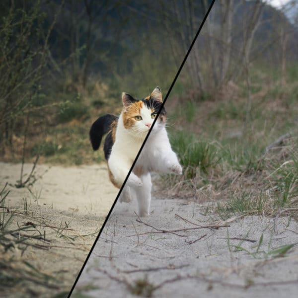 Lightroom presets by Paedii Luchs - strength - raw